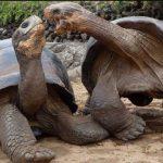 سلاحف 2109 تعرف على حياة السلاحف صور ميكس 44
