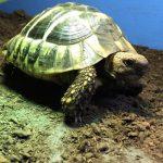سلاحف 2109 تعرف على حياة السلاحف صور ميكس 6