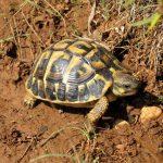 سلاحف 2109 تعرف على حياة السلاحف صور ميكس 8