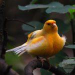 صور عصافير خلفيات عصفور معلومات كاملة عن العصافير 15