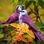 صور عصافير خلفيات عصفور معلومات كاملة عن العصافير 16