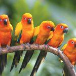 صور عصافير خلفيات عصفور معلومات كاملة عن العصافير 19