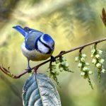 صور عصافير خلفيات عصفور معلومات كاملة عن العصافير 7