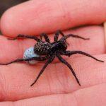 عنكبوت تعرف على أنواع العنكبوت وحياتة صور ميكس 12