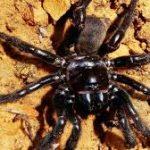 عنكبوت تعرف على أنواع العنكبوت وحياتة صور ميكس 19