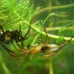 عنكبوت تعرف على أنواع العنكبوت وحياتة صور ميكس 20