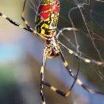 عنكبوت تعرف على أنواع العنكبوت وحياتة صور ميكس 21