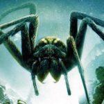 عنكبوت تعرف على أنواع العنكبوت وحياتة صور ميكس 26