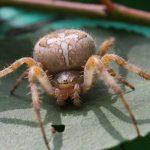عنكبوت تعرف على أنواع العنكبوت وحياتة صور ميكس 29