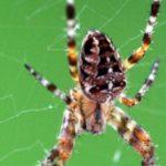 عنكبوت تعرف على أنواع العنكبوت وحياتة صور ميكس 34