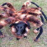 عنكبوت تعرف على أنواع العنكبوت وحياتة صور ميكس 43