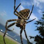 عنكبوت تعرف على أنواع العنكبوت وحياتة صور ميكس 44