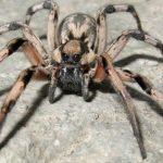 عنكبوت تعرف على أنواع العنكبوت وحياتة صور ميكس 6