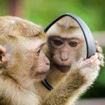 قرد تعرف على حياة القرود وأنوعها صور ميكس 1