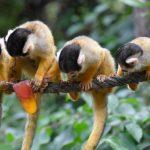 قرد تعرف على حياة القرود وأنوعها صور ميكس 10