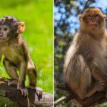 قرد تعرف على حياة القرود وأنوعها صور ميكس 11