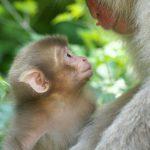 قرد تعرف على حياة القرود وأنوعها صور ميكس 13