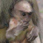 قرد تعرف على حياة القرود وأنوعها صور ميكس 16