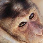 قرد تعرف على حياة القرود وأنوعها صور ميكس 17
