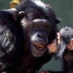 قرد تعرف على حياة القرود وأنوعها صور ميكس 2