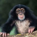 قرد تعرف على حياة القرود وأنوعها صور ميكس 21