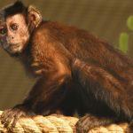 قرد تعرف على حياة القرود وأنوعها صور ميكس 26