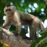 قرد تعرف على حياة القرود وأنوعها صور ميكس 27