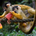 قرد تعرف على حياة القرود وأنوعها صور ميكس 29