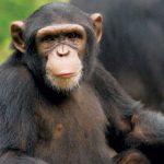 قرد تعرف على حياة القرود وأنوعها صور ميكس 30