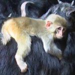 قرد تعرف على حياة القرود وأنوعها صور ميكس 31