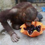 قرد تعرف على حياة القرود وأنوعها صور ميكس 34