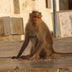 قرد تعرف على حياة القرود وأنوعها صور ميكس 35