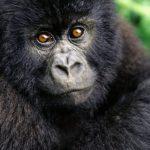 قرد تعرف على حياة القرود وأنوعها صور ميكس 36