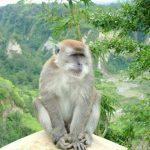 قرد تعرف على حياة القرود وأنوعها صور ميكس 38