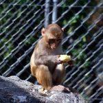 قرد تعرف على حياة القرود وأنوعها صور ميكس 39