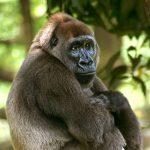 قرد تعرف على حياة القرود وأنوعها صور ميكس 41