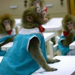 قرد تعرف على حياة القرود وأنوعها صور ميكس 5