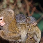 قرد تعرف على حياة القرود وأنوعها صور ميكس 8