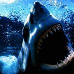قرش تعرف على حياة القرش وأنواعة صور ميكس 15