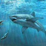 قرش تعرف على حياة القرش وأنواعة صور ميكس 30