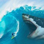 قرش تعرف على حياة القرش وأنواعة صور ميكس 33