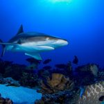 قرش تعرف على حياة القرش وأنواعة صور ميكس 43