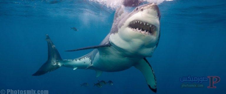 قرش تعرف على حياة القرش وأنواعة صور ميكس 6