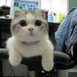 قطط 2019 أنواع القطط ومعلومات الفصائل صور ميكس 10
