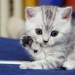 قطط 2019 أنواع القطط ومعلومات الفصائل صور ميكس 2
