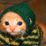 قطط 2019 أنواع القطط ومعلومات الفصائل صور ميكس 32