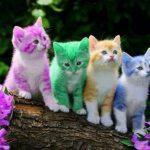قطط 2019 أنواع القطط ومعلومات الفصائل صور ميكس 4