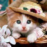قطط 2019 أنواع القطط ومعلومات الفصائل صور ميكس 5