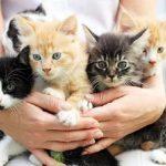قطط 2019 أنواع القطط ومعلومات الفصائل صور ميكس 6