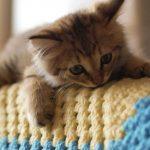 قطط 2019 أنواع القطط ومعلومات الفصائل صور ميكس 8